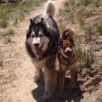Lightweight Trail Dogs